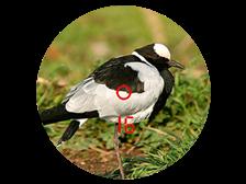 victory-rf-bird-range_224x168