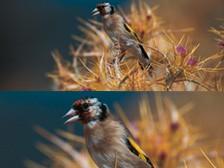 p-3724-victory-fl-bird-closeup_224x168.jpg